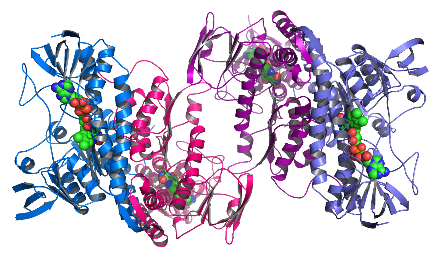 Argonne's_Midwest_Center_for_Structural_Genomics_deposits_1,000th_protein_structure